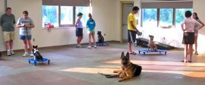 dog training, group obedience class, german shepherd