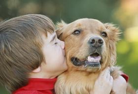 dog bite, dog kiss, dog bite prevention