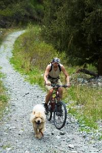 dog biking, dog walking, dog hiking