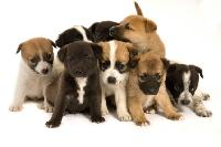 puppy training, puppy obedience, dog training