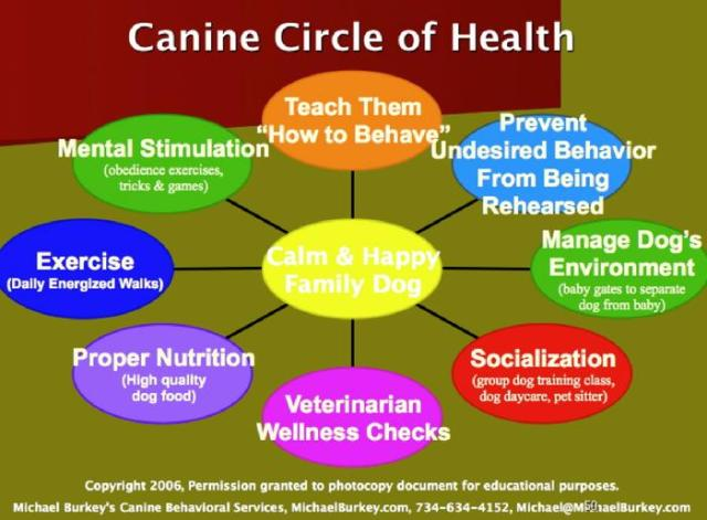 holistic dog health, calm dog, dog health, family dog