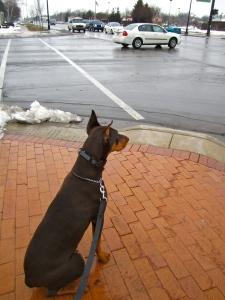 dog training, dog walking, dog obedience, private dog training