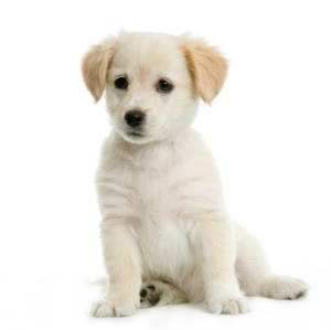 puppy training, potty training, puppy obedience, crate training