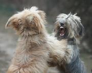 dog aggression, dog training