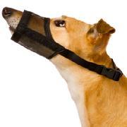 dog muzzle, dog aggression