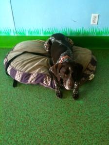 dog training, remote collar training, shock collar training, place command