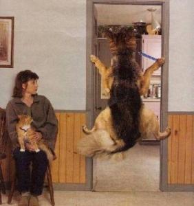 vet visits, veterinarian visits, dog training