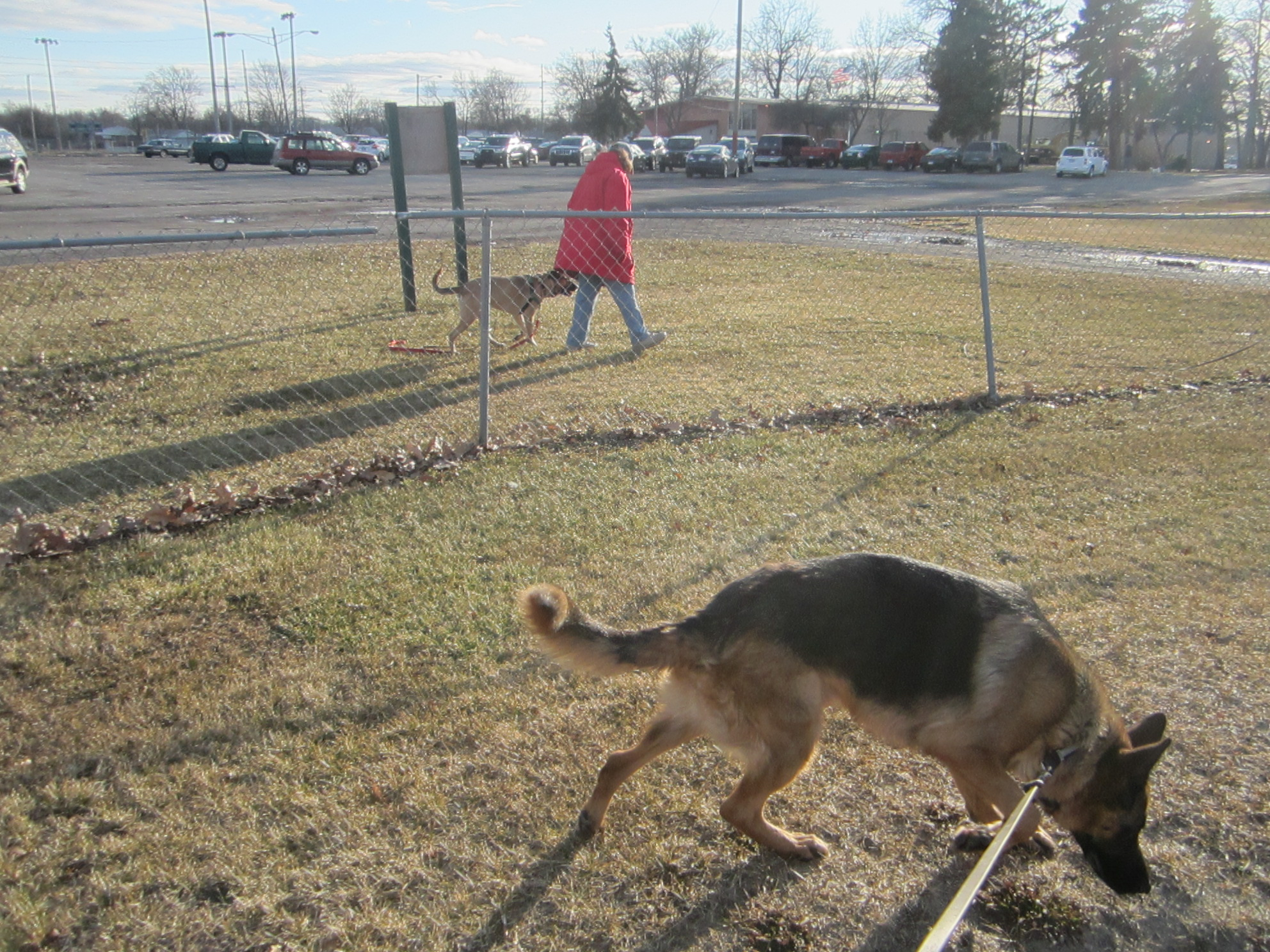 Wagging Tail May Indicate Dog Aggression