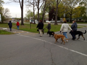 Garden City Park dog walk