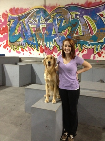 Golden Retriever trick dog Michigan Dog Trainer