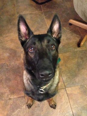 dog training, MIchigan Dog Trainer, Michigan Dog Training