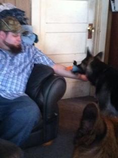 German Shepherd allows friends in house