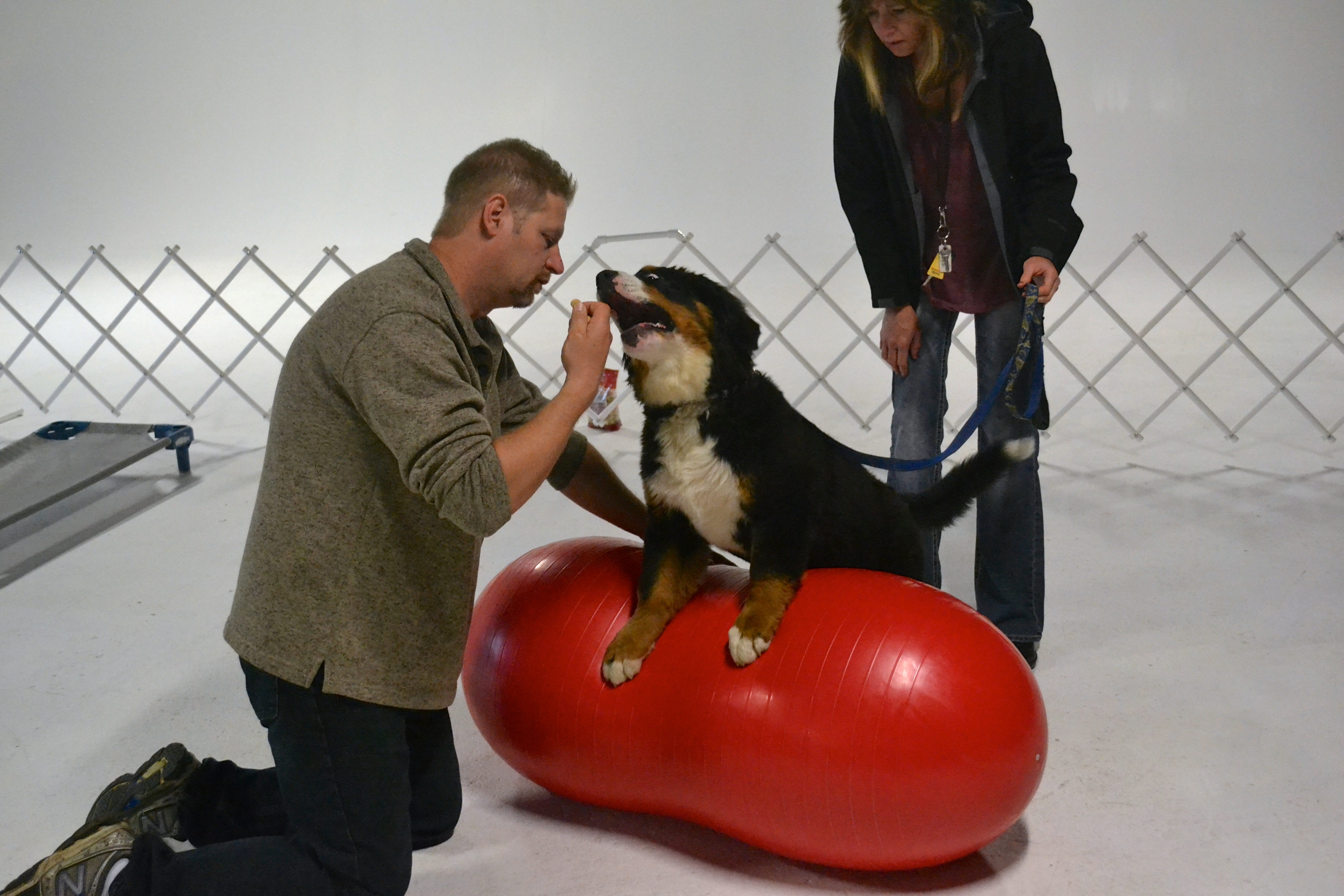 how to become akc registered