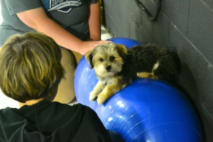 Rudy learning to change positions from a sit to a down on the peanut to develop core muscle strength and balance.