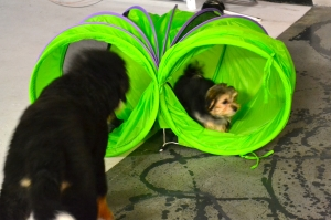 Rudy and Lucy having fun chasing each other through a tunnel.
