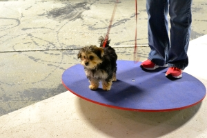 Rudy learning to balance on a wobbleboard.